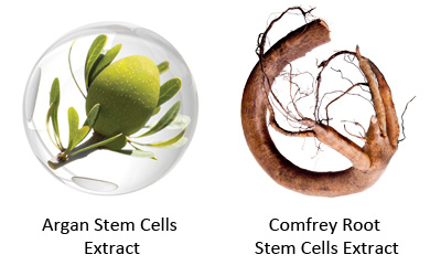 lab-spa-clinic-pevonia-stem-cells-4